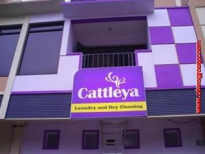 Neon Box Cattleya